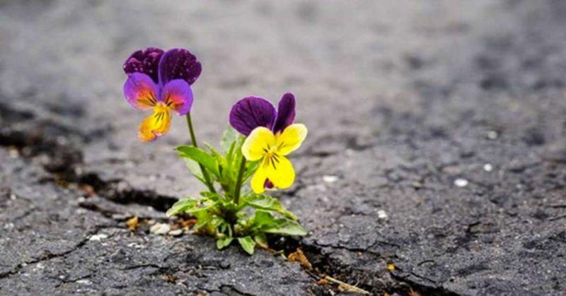 La capacità di mutare: resilienza